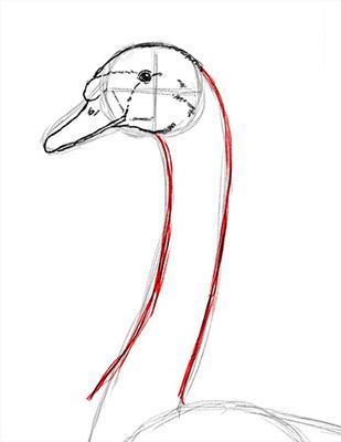 Как нарисовать лебедя карандашом - Шаг 11