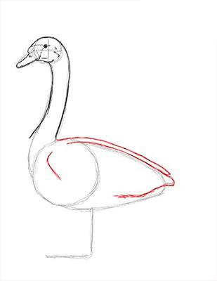 Как нарисовать лебедя карандашом - Шаг 12