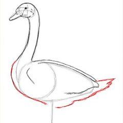 Как нарисовать лебедя карандашом поэтапно для начинающих