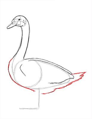 Как нарисовать лебедя карандашом - Шаг 13