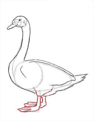 Как нарисовать лебедя карандашом - Шаг 14