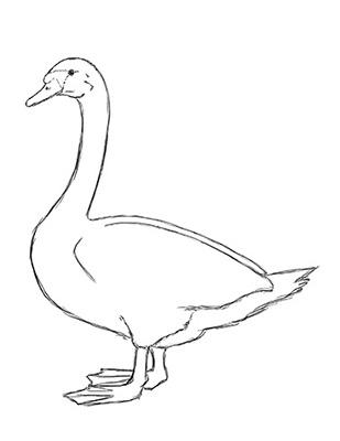 Как нарисовать лебедя карандашом - Шаг 15