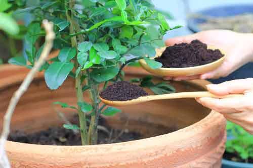 Удобряйте свой сад