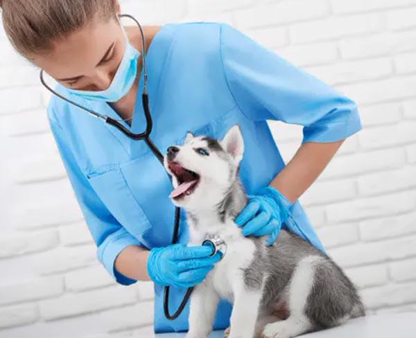 Проверка здоровья домашних животных