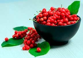 Китайский Лимонник - Растение содержит незаменимые жирные кислоты и лигнаны.