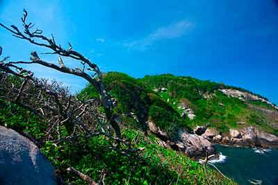 Остров золотой змеи Илья-де-Кеймада представляет собой небольшой кусочек земли, отрезанный от цивилизации, где живут тысячи змей