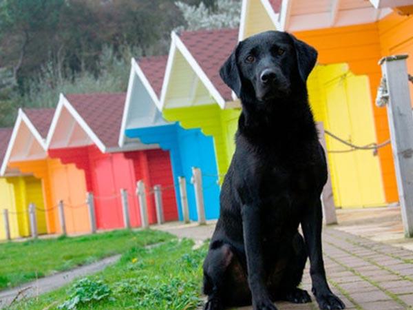 Собаки видят только черное и белое.