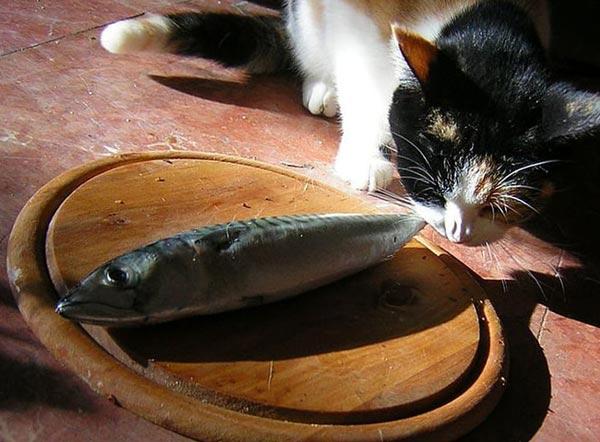 Ешь больше рыбы
