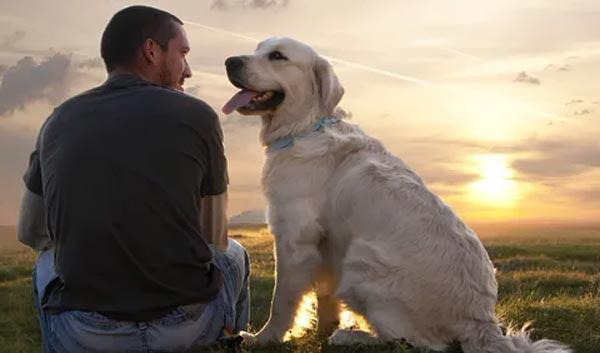 11 важных жизненных уроков, которым может научить ваша собака