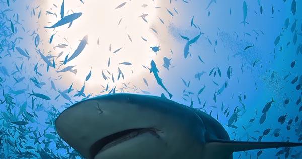 5 вещей, которые акулы делают для вас, а вы и не знаете