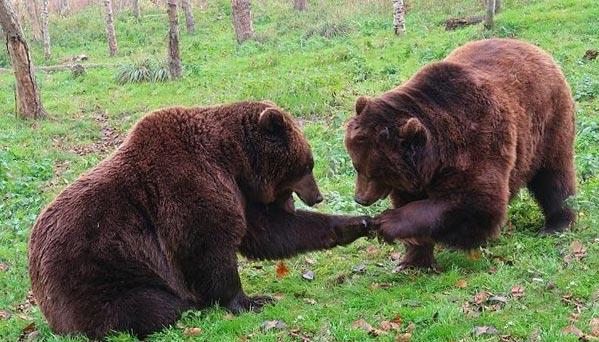 Значения снов о медведях