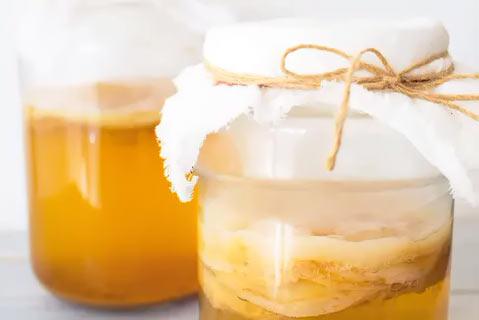 Чайный гриб, польза и вред, как правильно готовить. От чего помогает чайный гриб.