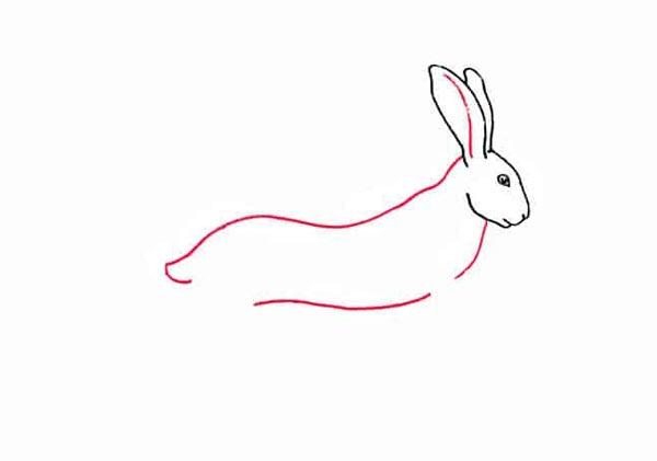 Разноцветный заяц шаг 3
