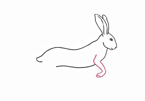 Разноцветный заяц шаг 4
