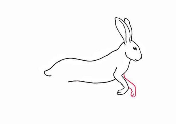 Разноцветный заяц шаг 5