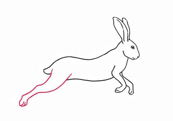 Разноцветный заяц шаг 6