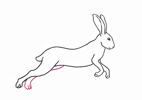 Разноцветный заяц шаг 7