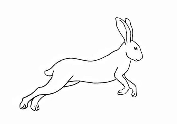 Разноцветный заяц шаг 8