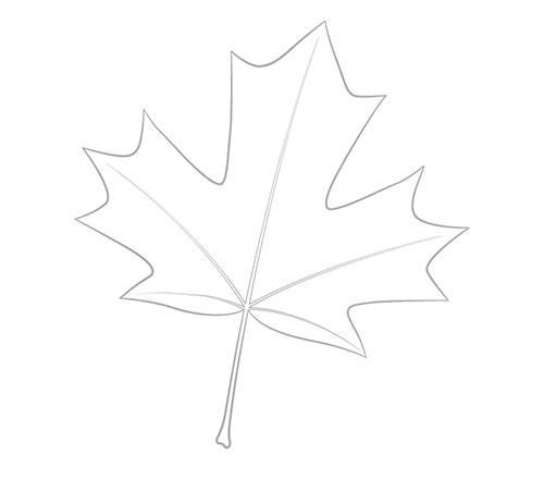 Нарисуйте контур кленового листа
