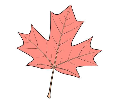 Раскрасьте кленовый лист
