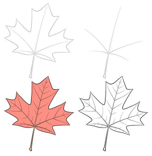 Как нарисовать кленовый листок карандашом поэтапно для начинающих