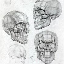 Поэтапное рисования лица человека карандашом - мужчина, женщина, пожилой человек, череп человека.