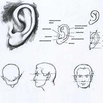 Как нарисовать лицо: 125 фото оживления и создания рисунка лица быстро и просто
