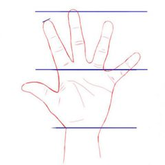 Пропорции руки человека для рисования