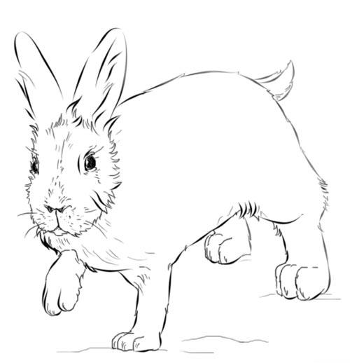 Как нарисовать зайца 9