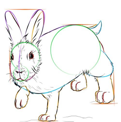 Как нарисовать зайца шаг 8