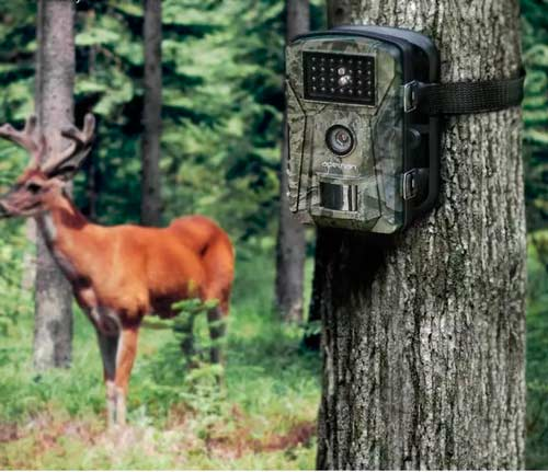 Камера съёмки дикой природы в подарок папе